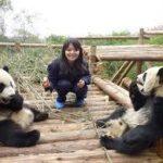 阿部展子/パンダ画像写真や動画映像かわいい!飼育員きっかけにほっこり